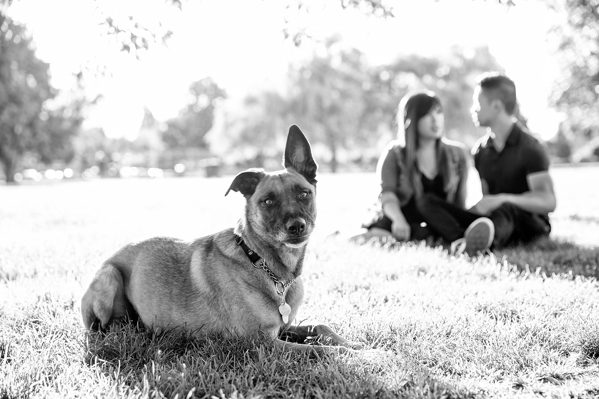 Vancouver dog photographer