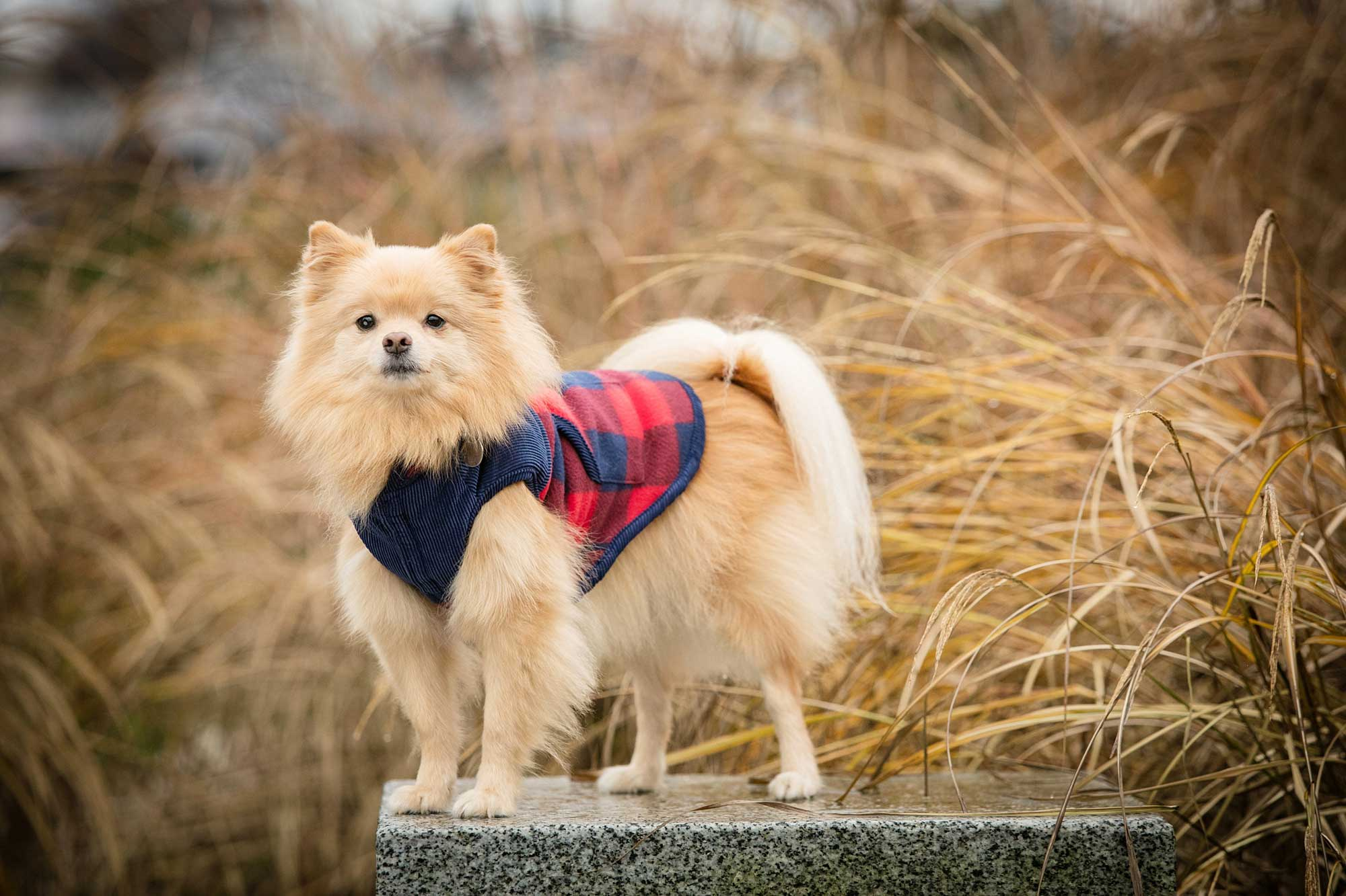 vancouver pet dog photography
